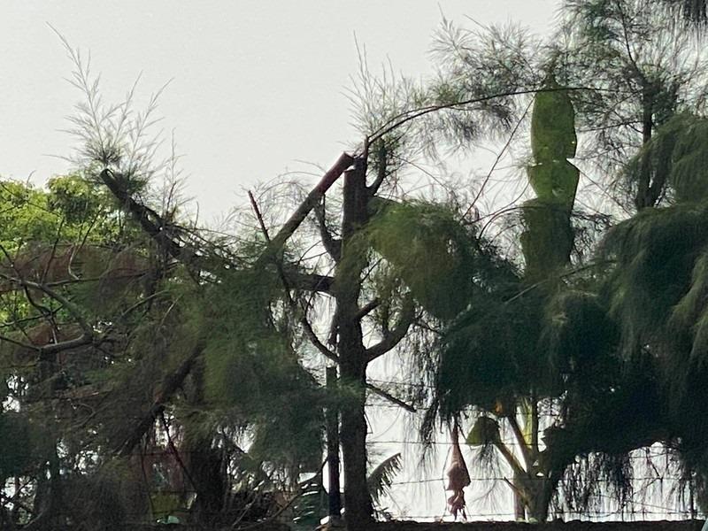 Học sinh tử vong khi cắt tỉa cây: Hiệu trưởng vi phạm nghiêm trọng quy định