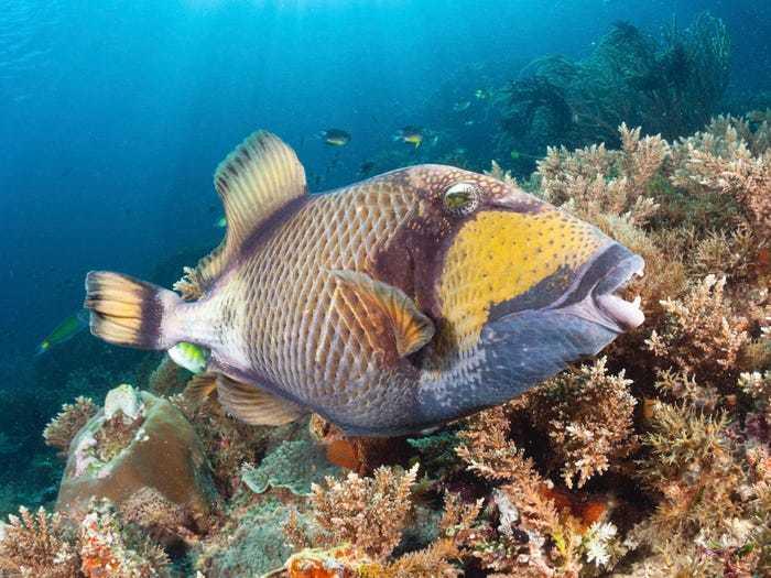 Sự thật loài cá có răng trắng đều tăm tắp như con người gây bão mạng xã hội