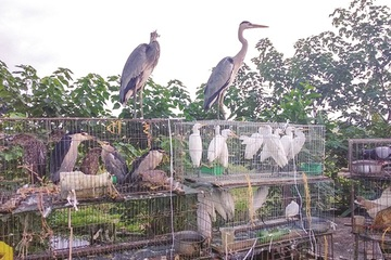 UNODC cảnh báo các quốc gia trong đó có Việt Nam về nạn buôn bán động vật hoang dã