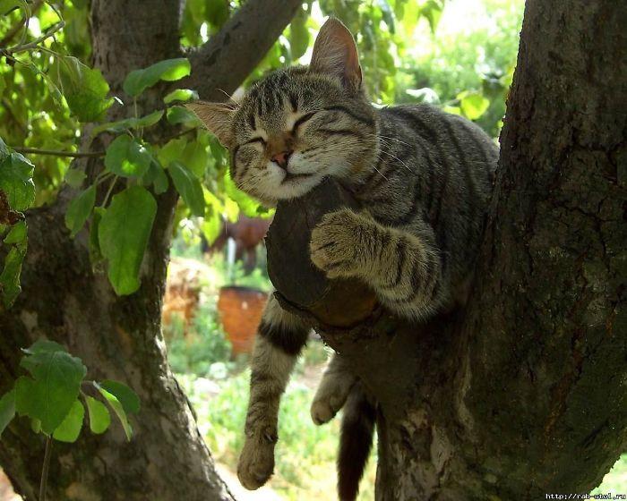 Vì sao mèo thích thể hiện khả năng ... ngủ trên cây cao?