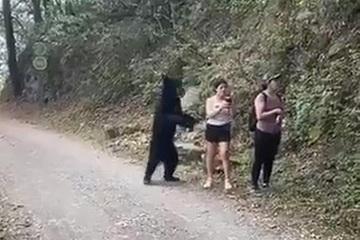 Nữ du khách 'siêu' bình tĩnh: Gặp gấu hoang còn chụp ảnh selfie