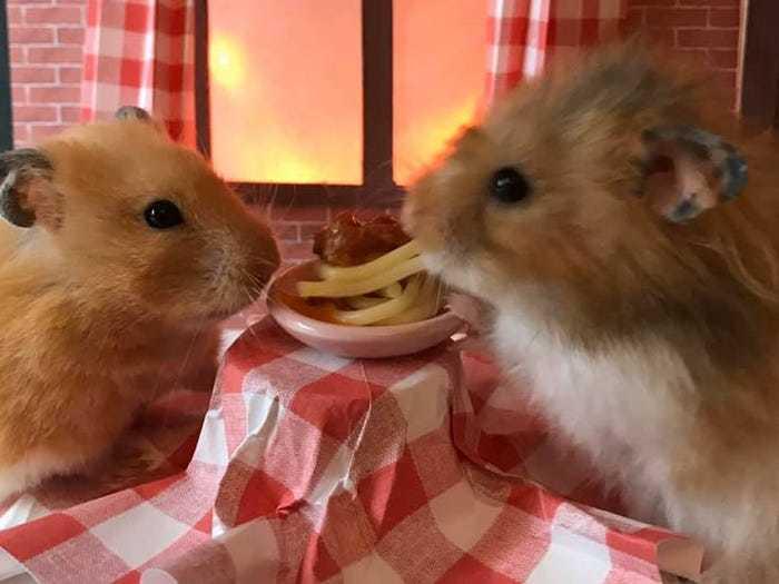 mô hình cho chuột hamster