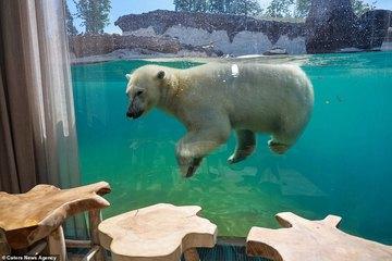 Kinh ngạc dịch vụ nghỉ dưỡng cùng hà mã, gấu Bắc Cực ở Bỉ