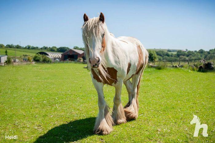 Chú ngựa hoang nước Anh trở về 'từ cõi chết'