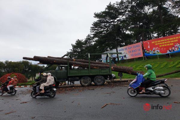Đà Lạt: Mưa lớn kéo dài, thông đổ ngổn ngang trên đèo Preen