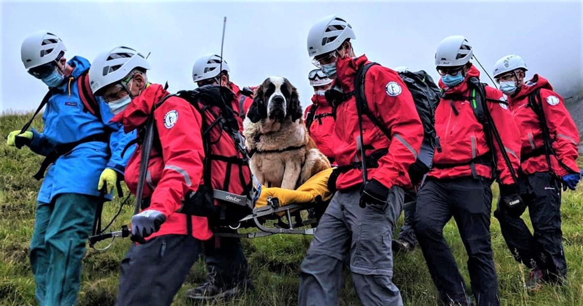 Huy động đội cứu hộ giải cứu chó mắc kẹt trên ngọn núi cao nhất nước Anh