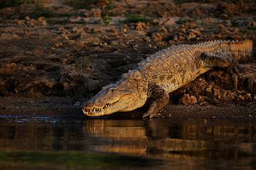 Thực hiện nghi lễ cổ, chàng trai bị cá sấu tấn công kinh hoàng