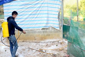 Tuyên Quang: Gần 60% đàn gia cầm được tiêm đủ các mũi vắc xin phòng, chống bệnh dịch