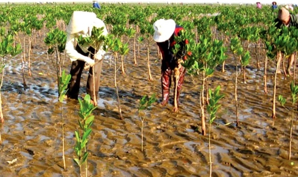 Kế hoạch quốc gia thích ứng với biến đổi khí hậu giai đoạn 2021 - 2030, tầm nhìn đến 2050