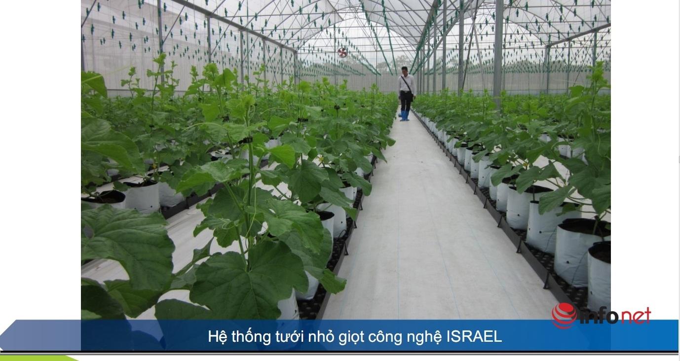Tận mắt xem trồng dưa lưới công nghệ cao hiện đại bậc nhất Việt Nam