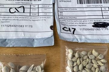 Người đàn ông thử gieo hạt giống bí ẩn từ Trung Quốc và cái kết bất ngờ