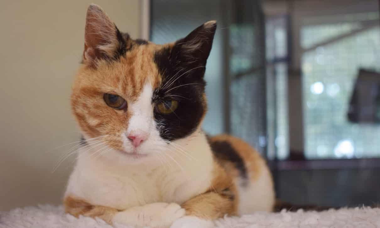 Hi hữu: Chủ bất ngờ tìm thấy mèo đi lạc trong rừng sau 12 năm