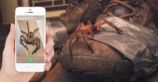 Australia phát triển ứng dụng nhận diện, cảnh báo rắn độc và nhện khổng lồ