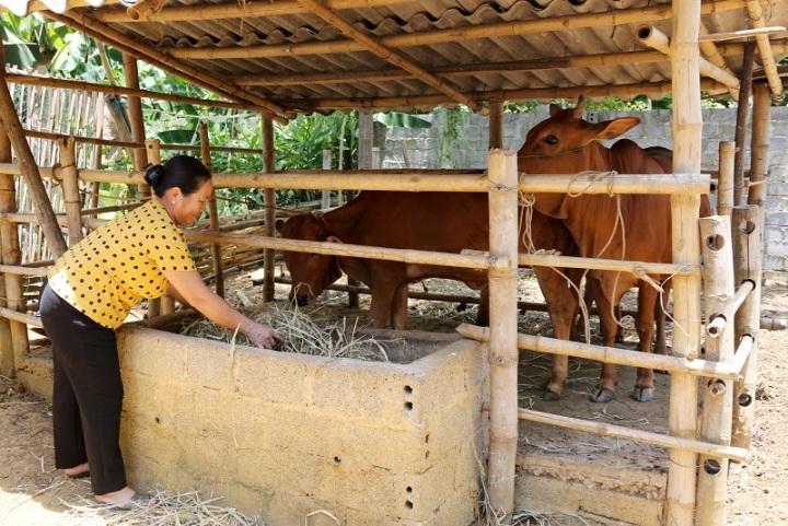 Thẻ thấu chi nông nghiệp: Cho vay lãi suất 720%/năm hết 'đất diễn'