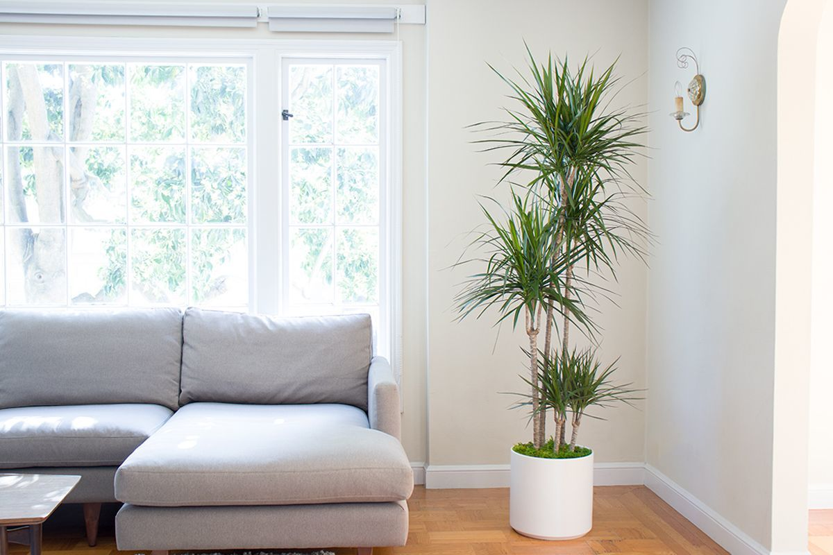 9 loại cây cảnh giúp cải thiện chất lượng không khí trong nhà