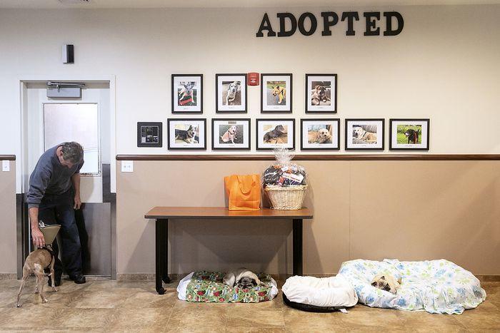 Cận cảnh viện dưỡng lão đẳng cấp dành cho thú cưng ở Mỹ