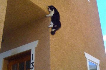 15 khoảnh khắc hài hước của mèo chống lại mọi định luật vật lý