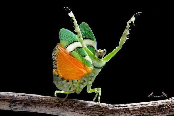 Choáng với vẻ đẹp chưa từng được biết đến của bọ ngựa