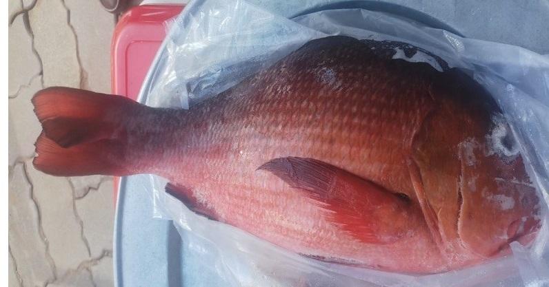 Đề phòng ngộ độc thực phẩm do ăn cá hồng