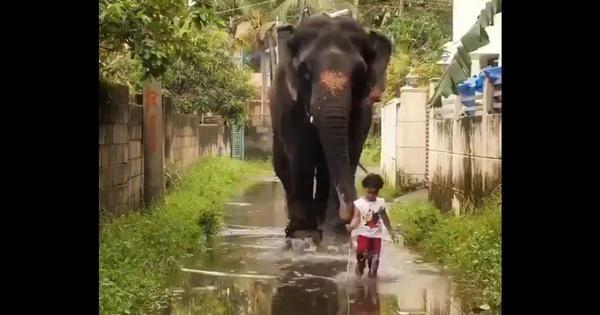 Hi hữu cô bé 2 tuổi kết bạn với voi ở Ấn Độ