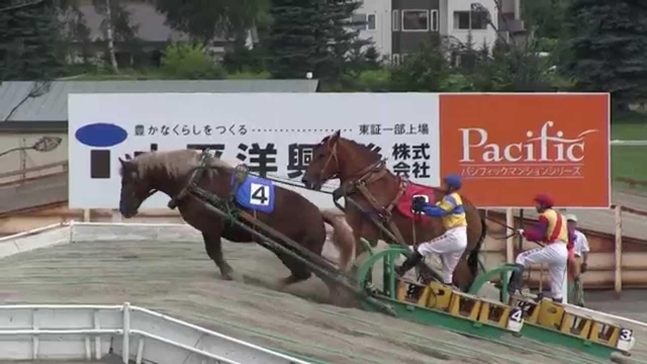 Kỳ lạ cuộc đua ngựa chậm nhất thế giới