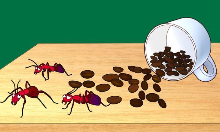 bã cà phê làm gì