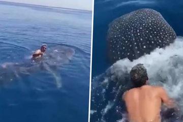 Khoảnh khắc người đàn ông cưỡi cá mập voi trên Biển Đỏ gây bão mạng