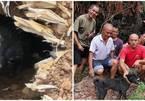 Chú chó sống sót thần kỳ sau 37 ngày mắc kẹt trong đống đổ nát
