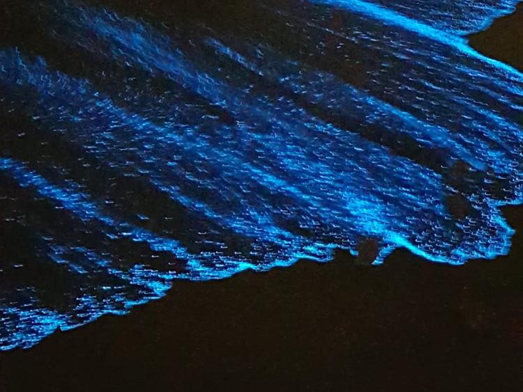 Sóng biển phát sáng màu xanh ở Mỹ