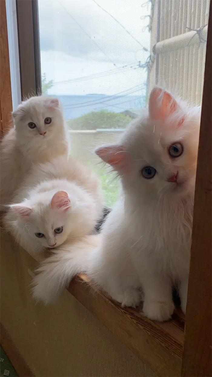 Dịch vụ thử nuôi mèo hút khách ở Nhật Bản
