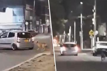 Chú chó đau buồn đuổi theo xe khi bị chủ bỏ rơi
