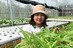 9X khởi nghiệp trồng rau công nghệ cao thành công