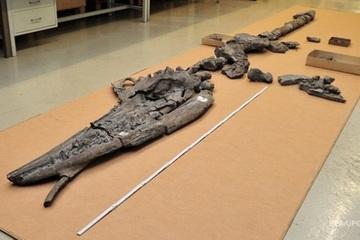 Phát hiện bộ xương khủng long bên trong một con khủng long khác