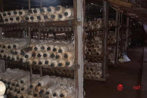 Quảng Bình: Đưa nấm bào ngư xám về miền núi Tuyên Hóa