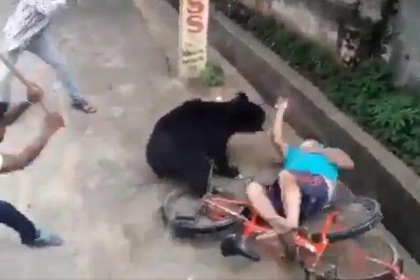 Gấu chạy vào khu dân cư tấn công người ở Ấn Độ