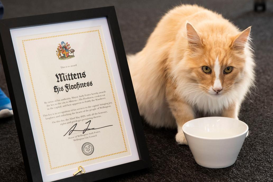 Mèo được đề cử giải Gương mặt của năm ở New Zealand