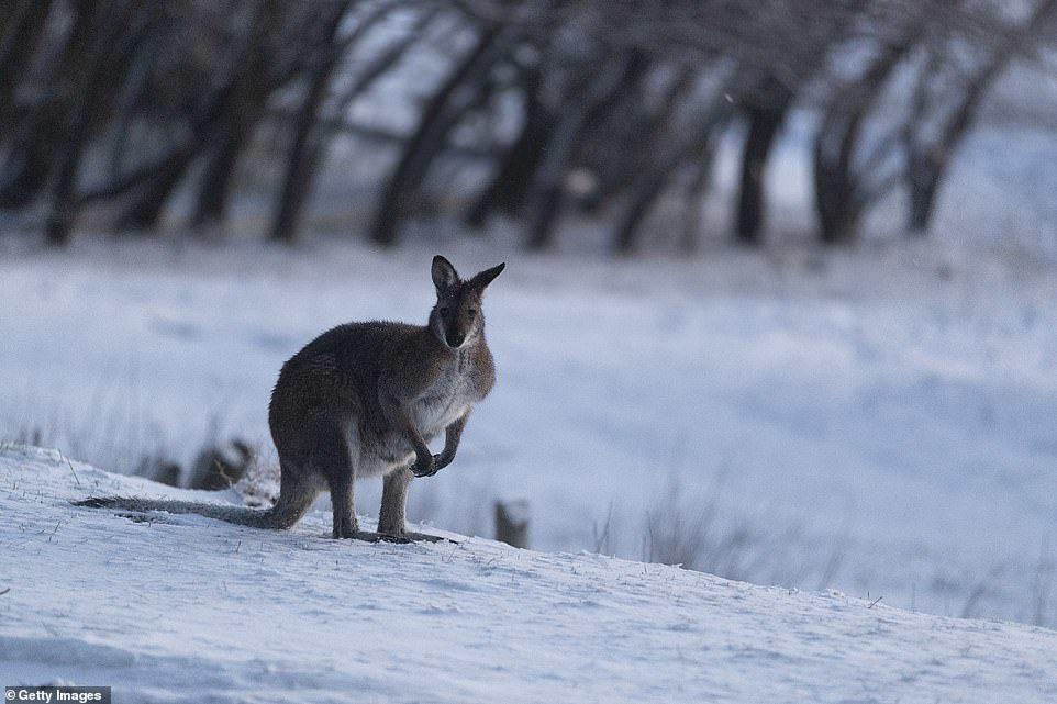Lần đầu tiên sau 15 năm, tuyết rơi kỷ lục giữa tháng 8 ở Australia