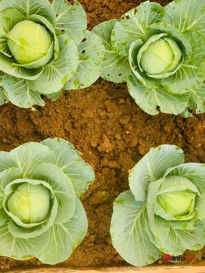 """Mãn nhãn khu vườn rau 'xa xỉ"""" trên sân thượng ở Sơn La"""