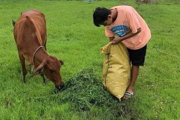 Nam sinh chăn bò, nhặt rau giúp mẹ đạt 9,75 điểm môn Văn
