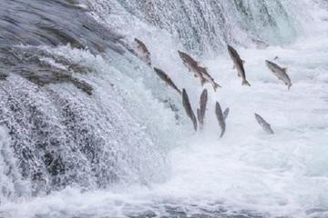 Chuyện 3 loài cá minh chứng tình cảm thiêng liêng của cuộc đời