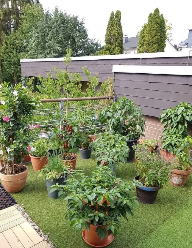 Phát thèm với khu vườn trĩu quả của mẹ Việt tại Đức