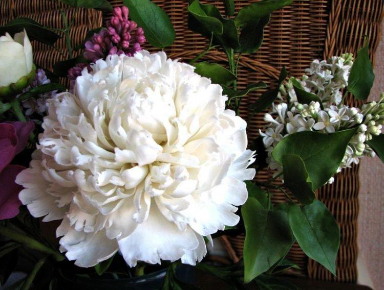 Kinh ngạc với những bó hoa tuyệt đẹp làm từ sứ