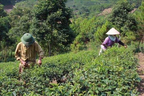 Lạng Sơn hỗ trợ việc làm, nhà ở cho hàng chục nghìn hộ nghèo