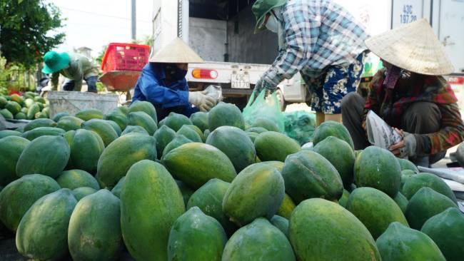 Hàng chục tấn đu đủ Quảng Nam bị ép giá, người Đà Nẵng ra tay 'giải cứu' hết veo