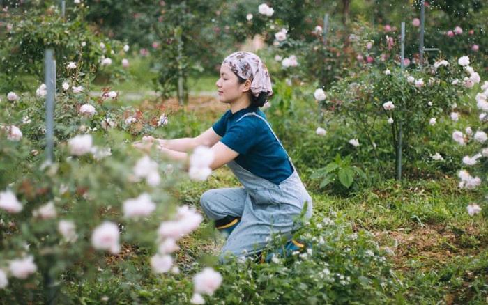 Chỉ với số vốn 2,2 triệu đồng, cô giáo yêu hoa thành bà chủ trang trại hoa hồng rộng lớn