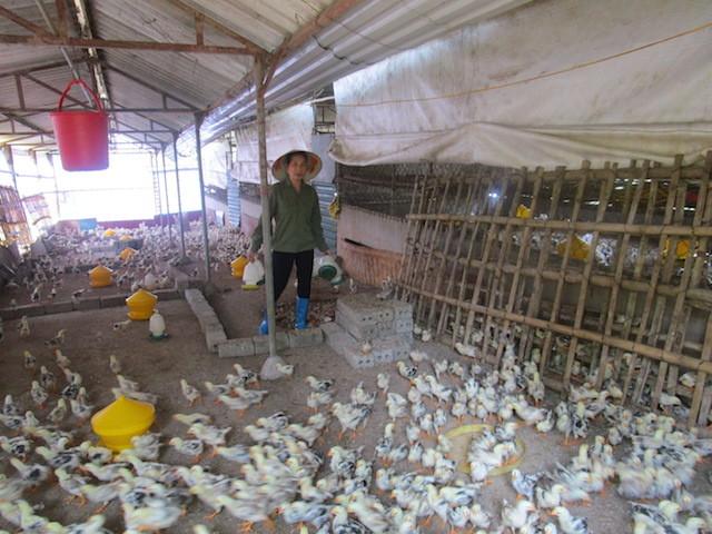 Hà Nội triển khai đồng bộ nhiều giải pháp tạo sinh kế cho các hộ nghèo, cận nghèo