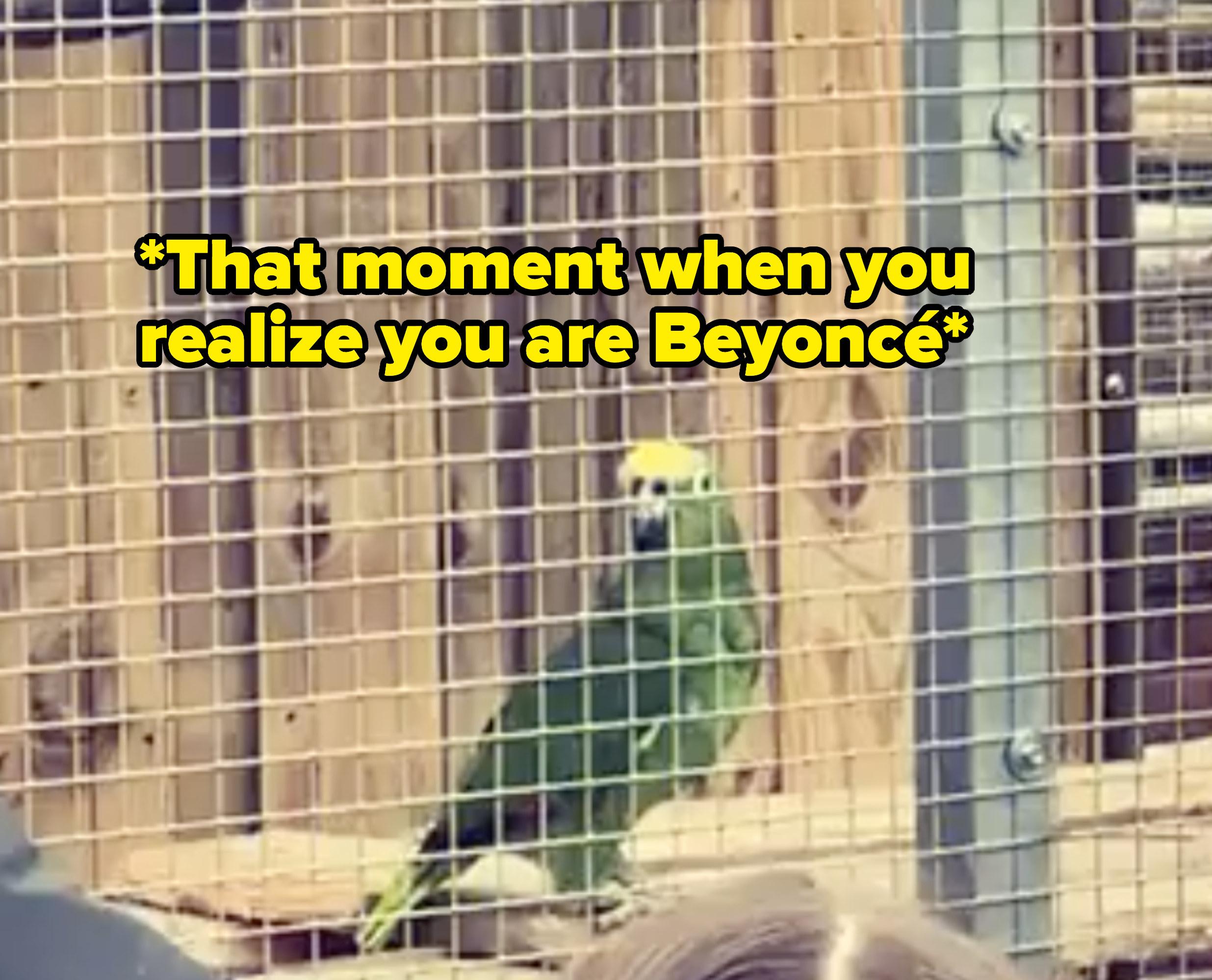 Hát nhạc của ca sĩ Beyonce, chú vẹt ở sở thú Anh gây bão