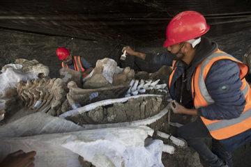 Phát hiện nghĩa địa voi ma mút khổng lồ ở công trường Mexico