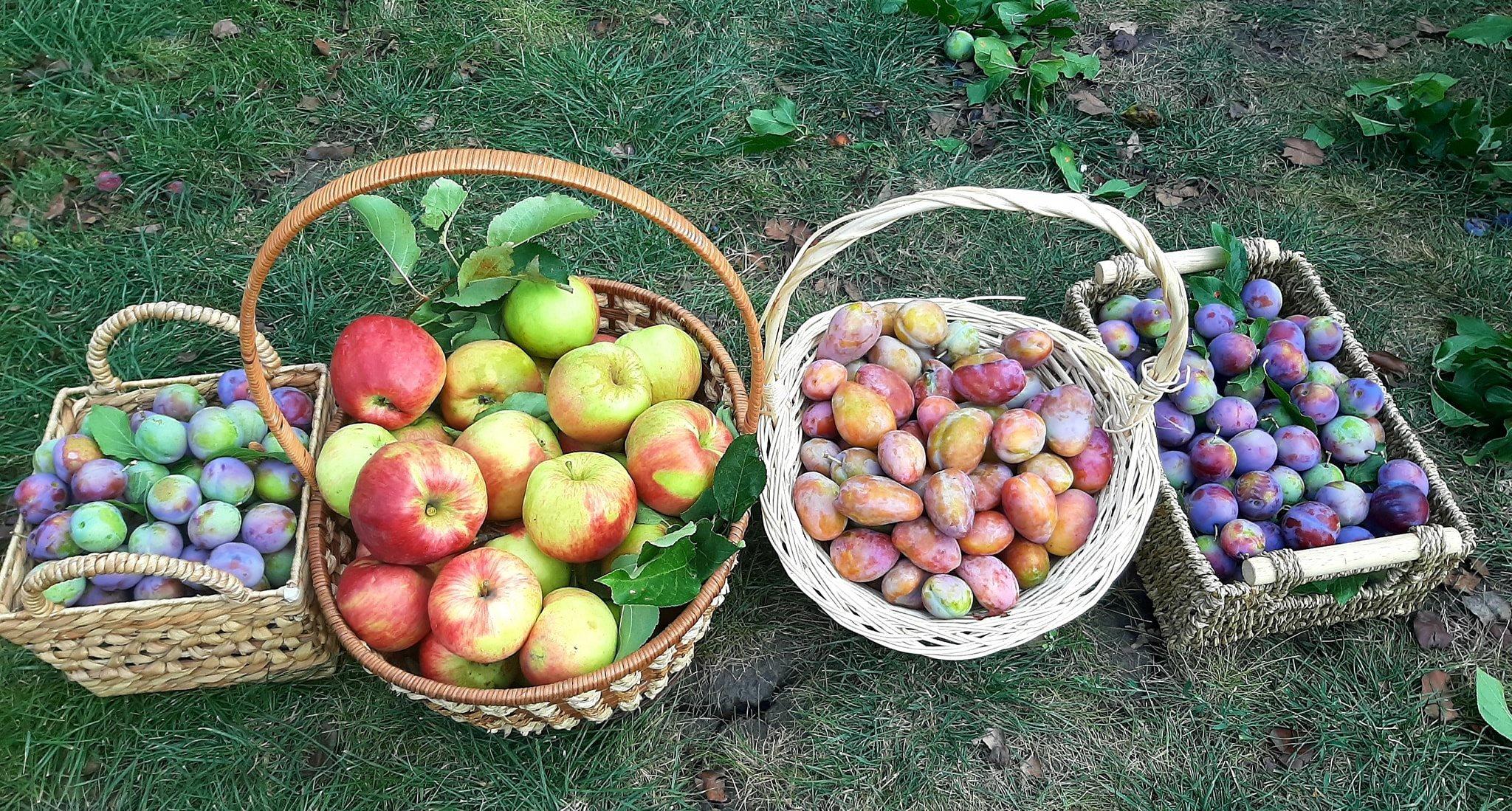 Bếp củi tuổi thơ và khu vườn 3.000m2 cây trái trĩu cành của mẹ Việt tại Nga