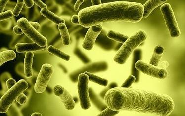 Độc tố Botulinum trong ngộ độc Pate Minh Chay nguy hiểm như thế nào?